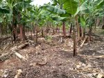 land for sale in Buteebe Fort portal city